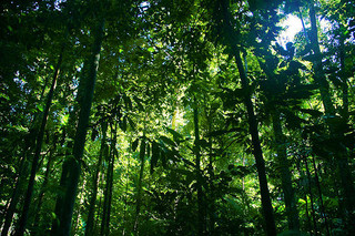 Rainforests and tradable permits